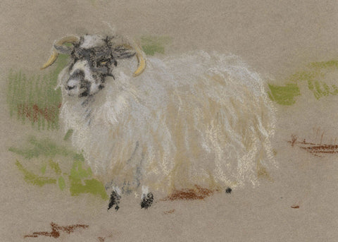 John Murray Thomson RSA, Ewe with Horns-Original mid-20th-century pastel drawing
