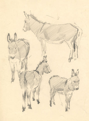 John Murray Thomson RSA, Donkey Study - mid-20th-century graphite drawing