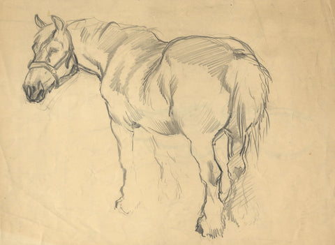 John Murray Thomson RSA, Shire Horse -Original mid-20th-century graphite drawing