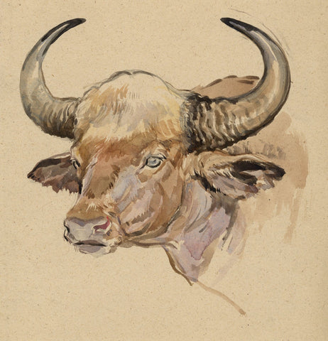 John Murray Thomson RSA, Horned Bull - mid-20th-century watercolour painting