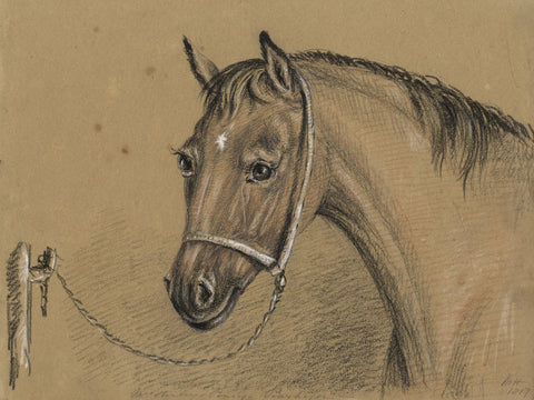 M. Heber, Mrs Stanley's Pony - Original 1817 chalk drawing