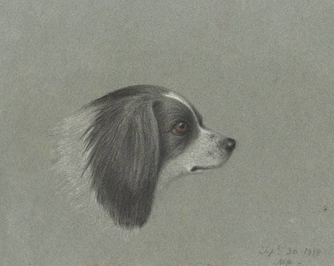 M. Heber, Cavalier King Charles Spaniel Dog Portrait - 1818 chalk drawing