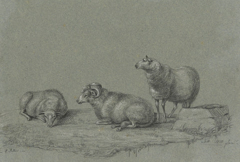 M. Heber, Three Sheep after Paulus Potter - Original 1818 chalk drawing