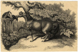 Horses Meeting over a Fence - Outstanding 19th-century pen & ink drawing