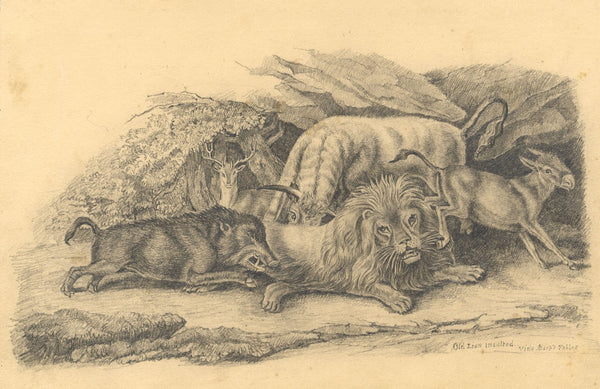 Aesop Fable Old Lion Insulted after Samuel Howitt -19th-century graphite drawing