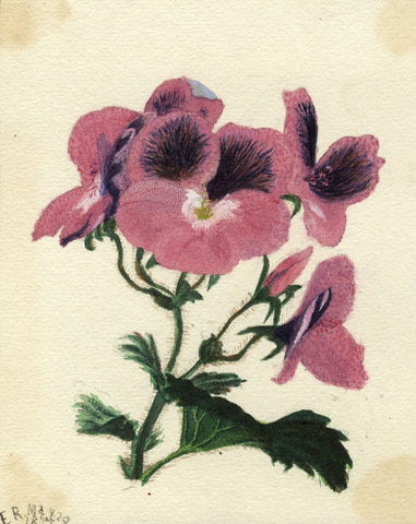 Ethel Robinson, Geranium Flower - Original 1875 watercolour painting