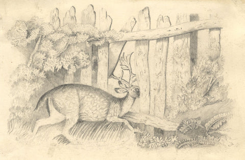 F. Barber, Deer in the Undergrowth - Original 19th-century graphite drawing