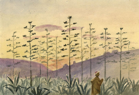 Nora H. Silver, Agave Century Plants in Bloom, Tangier - 1892/3 watercolour