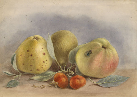 G.P., Apples Still Life with Fly - Original 1889 watercolour painting