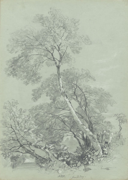 S.L. Collis, Ash Tree after James Duffield Harding - c.1852 graphite drawing