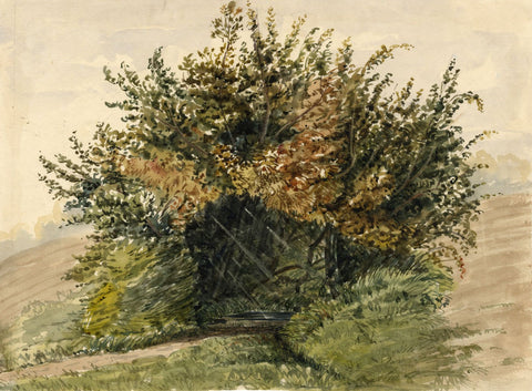 Jane D. Harvey, Copse of Trees from Nature - c.1845 watercolour painting