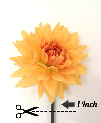 Flower Stem Cut 1 Inch