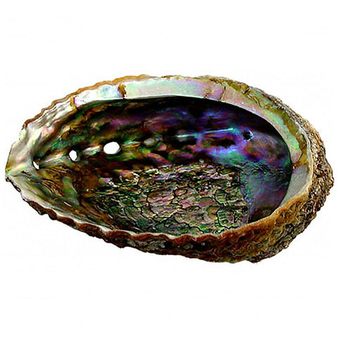 Incense Holder-Abalone Shell-Daylyn