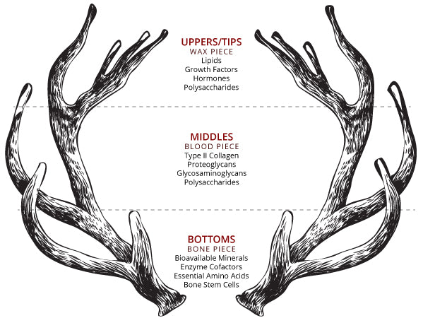 Deer Antler velvet Sectional Analysis