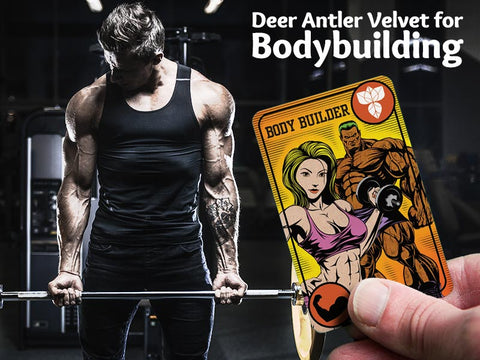 Deer Antler Velvet for Bodybuilding Weightlifting, and Physique Lifestyles