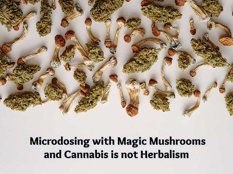 Microdosing with Magic Mushrooms and Cannabis is Not Herbalism