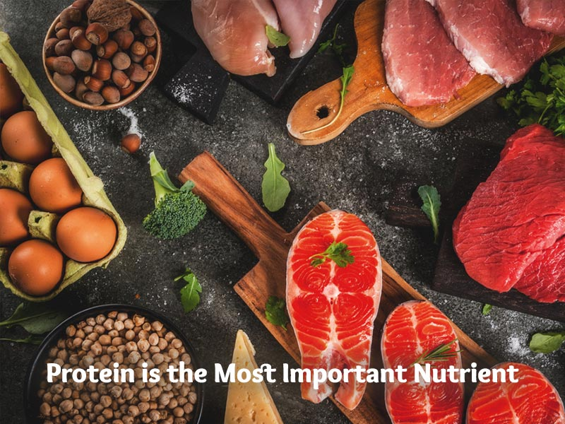 Protein is the Most Important Nutrient
