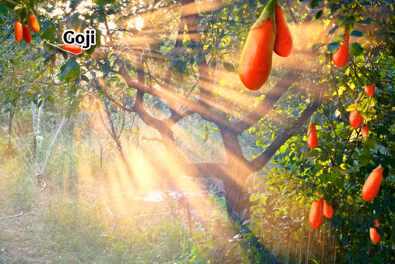 Goji Supplement Poster
