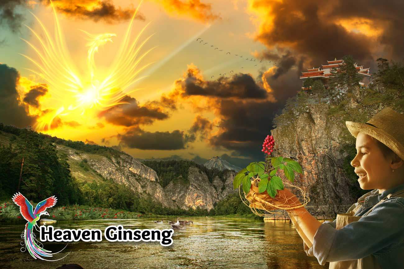Heaven Ginseng Supplement Poster