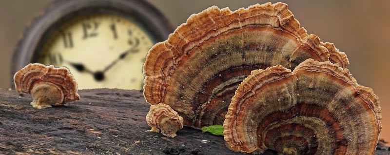 Turkey Tail Time Concept