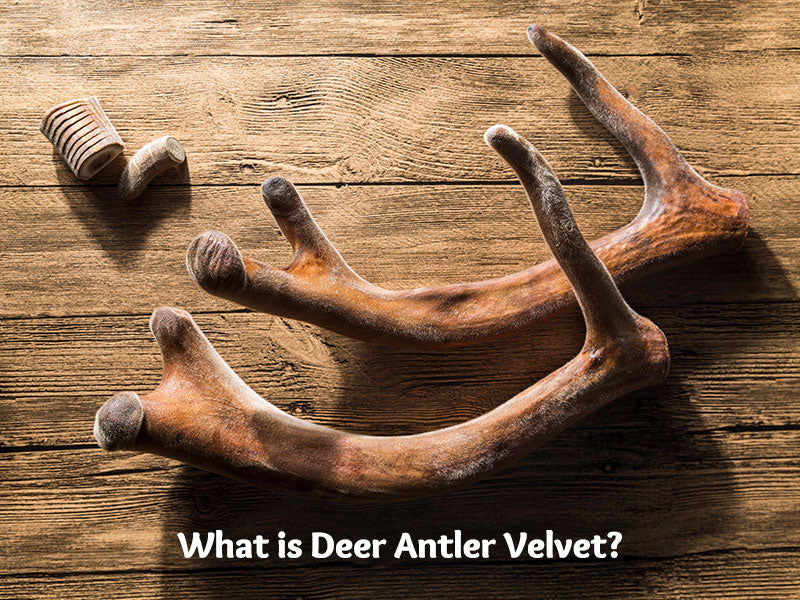 What is Deer Antler Velvet?