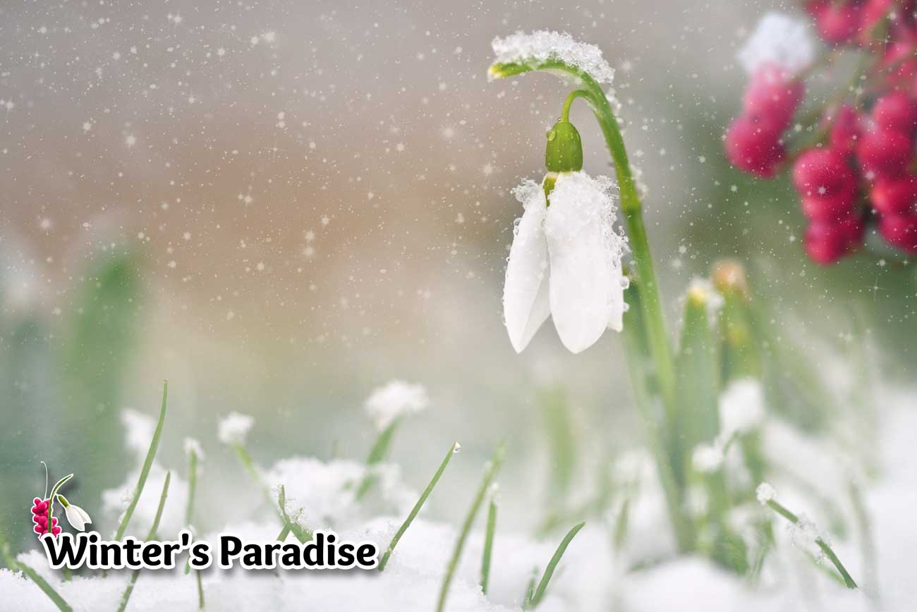 Winter's Paradise Poster