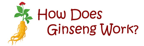 How Does Ginseng Work?