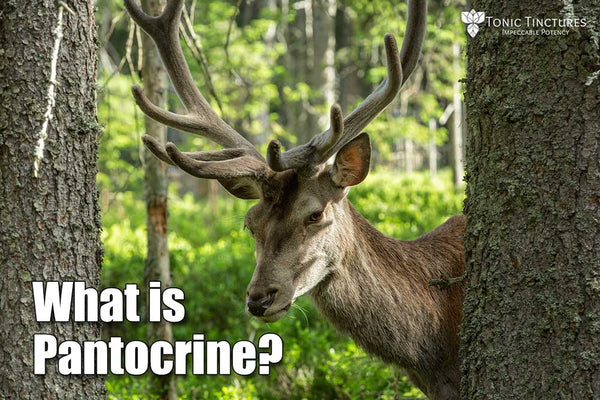 what-is-Pantocrine | By Tonic Tinctures