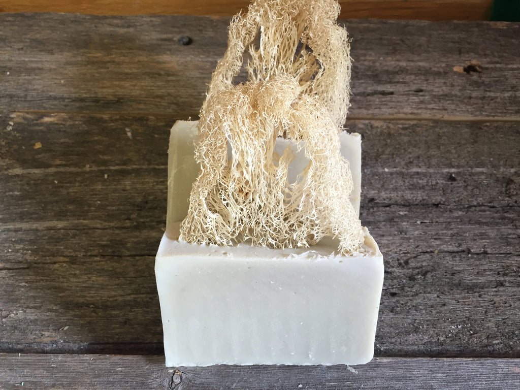 The Scrubbed Earth Soap (Loofah)