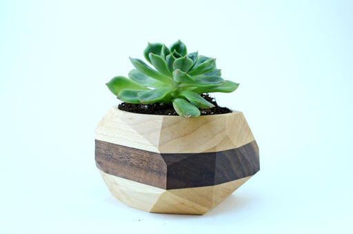 Unique Wood Cactus Succulent Pot Terrarium - Alluforu