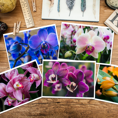 Assorted Orchid Notecards-Set of 5 Any Occasion Orchid Greeting Cards - april bern photography