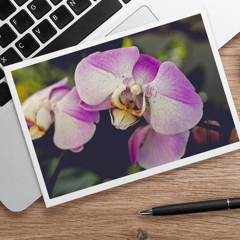 Orchid Stationary, Blank Greeting Card