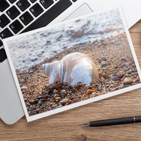 Seashell Notecard - Blank Seashell Photo Card