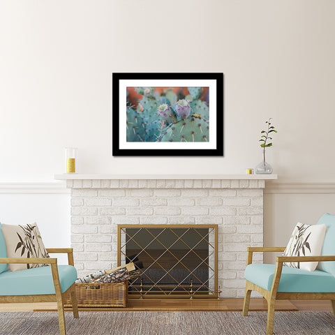 Southwest Desert Photography Cactus Art