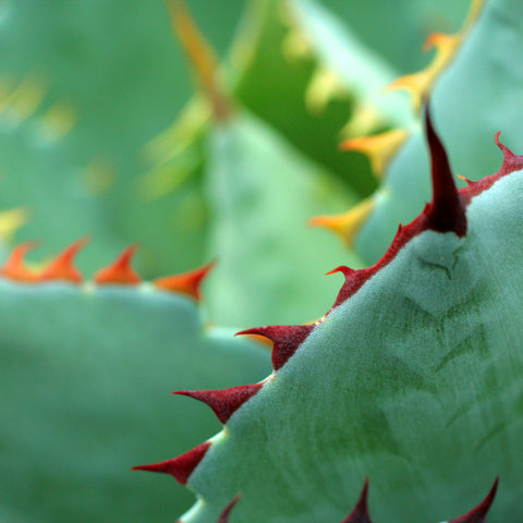 Abstract Agave Colors Fine Art Photography - april bern photography
