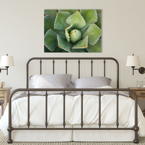 Agave Wall Art - Ready to Hang Gallery Wrapped Canvas
