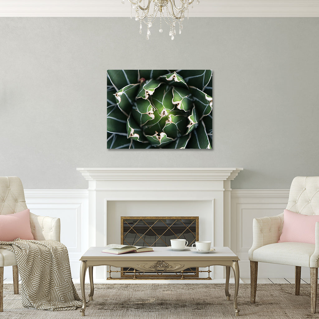 Ready to Hang Queen Victoria Agave Canvas- Succulent Wall Decor - april bern photography