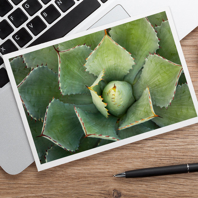 Agave Card, Succulent Photo Card - april bern photography
