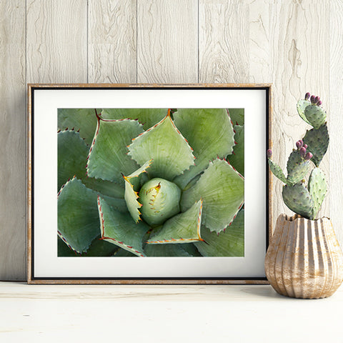 Abstract Agave Fine Art Photography
