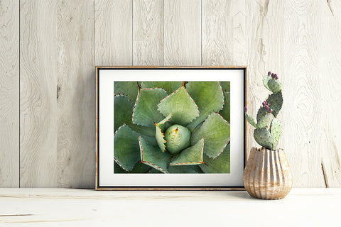 Agave - Fine Art Photography - april bern photography