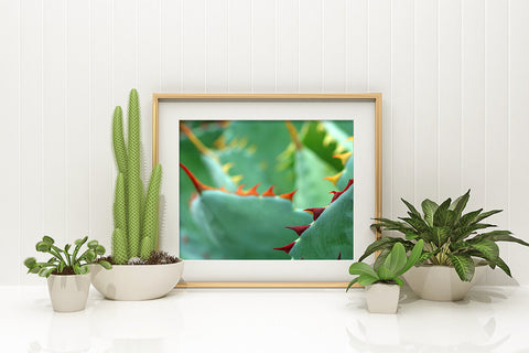 Agave Fine Art Photography Print