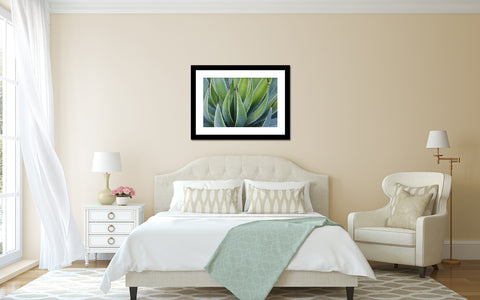 Agave Photo - Desert Art Print - april bern photography