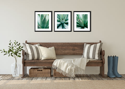 Set of 3 Agave Prints - Succulent Gallery Wall Art - april bern photography
