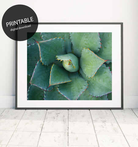 Printable Wall Art - Succulent Instant Download