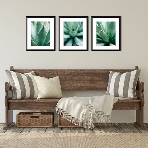 Set of 3 Agave Prints - Succulent Gallery Wall Art
