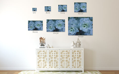 his succulent photo art print is available in a variety of popular sizes: 5x5, 5x7, 8x8, 8x10, 10x10, 11x14, 12x12, 16x20, 20x30, 24x36