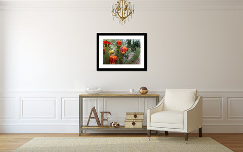 Flowering Cactus Garden Art Print - Desert Art - april bern photography