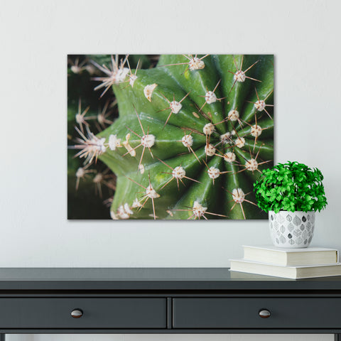 Cactus Wall Art - Ready To Hang Gallery Wrap Canvas Print - april bern art & photography