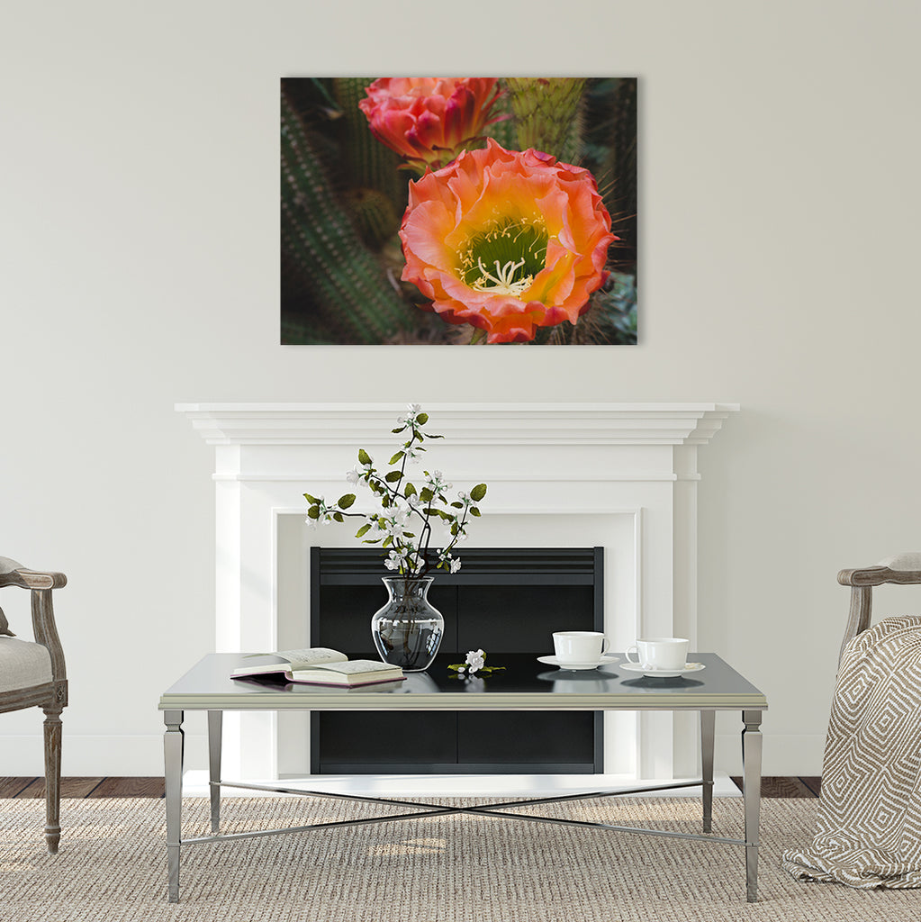 Cactus Bloom Wall Art - Ready to Hang Gallery Wrapped Canvas - april bern photography
