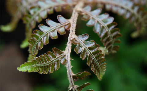 Fern Photography, Green Wall Decor, Nature Photo - april bern photography